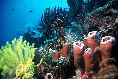 http://macsman.files.wordpress.com/2008/10/bunaken-reef.jpg?w=463&h=189